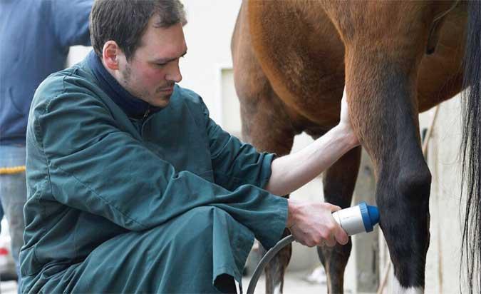 schockwave terapia ad onde d'urto veterinaria cavalli